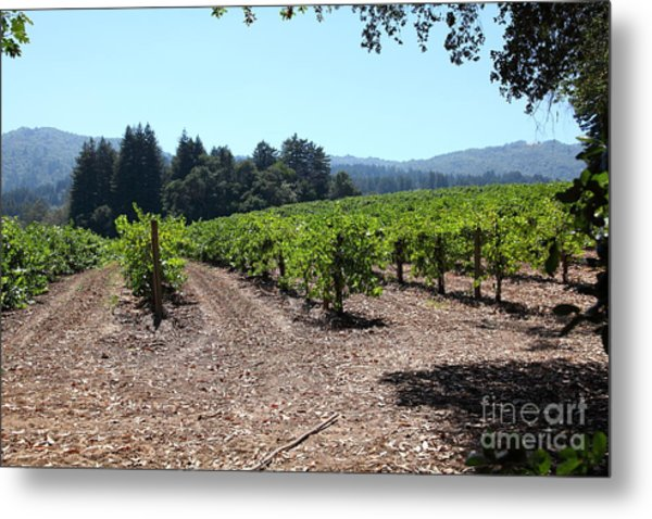 Sonoma Vineyards In The Sonoma California Wine Country 5d24511 Metal Print by Wingsdomain Art and Photography