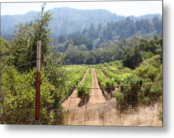 Sonoma Vineyards In The Sonoma California Wine Country 5d24521 Metal Print by Wingsdomain Art and Photography