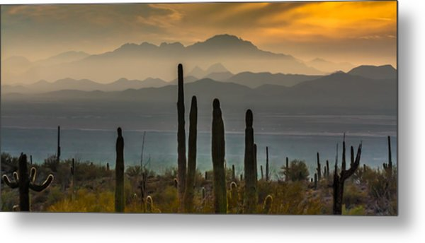 Sonoran Desert Sunset Metal Print