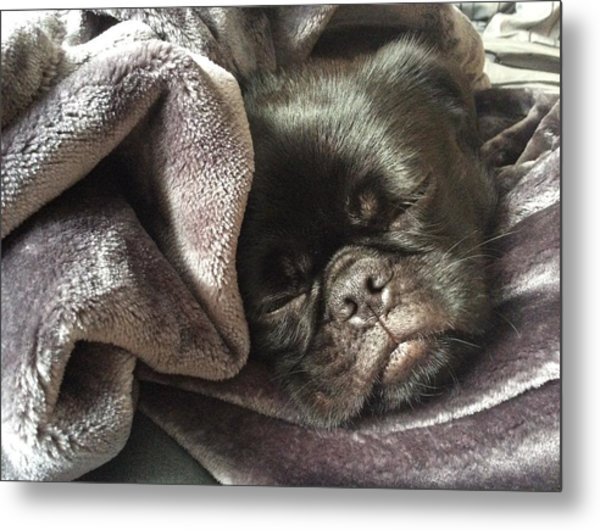 Soundly Sleeping Metal Print