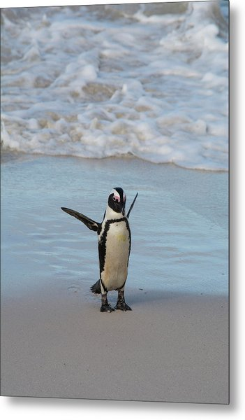 South Africa, Cape Town, Simon's Town Metal Print by Cindy Miller Hopkins