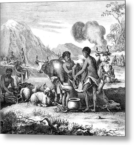 South Africa, Khoikhoi Butchering Cattle Metal Print