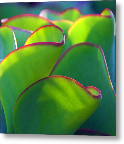 South African Beauty Metal Print