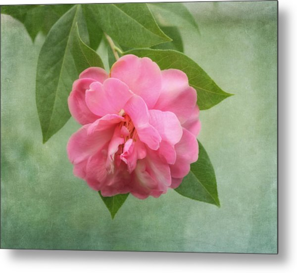 Metal Print featuring the photograph Southern Camellia Flower by Kim Hojnacki