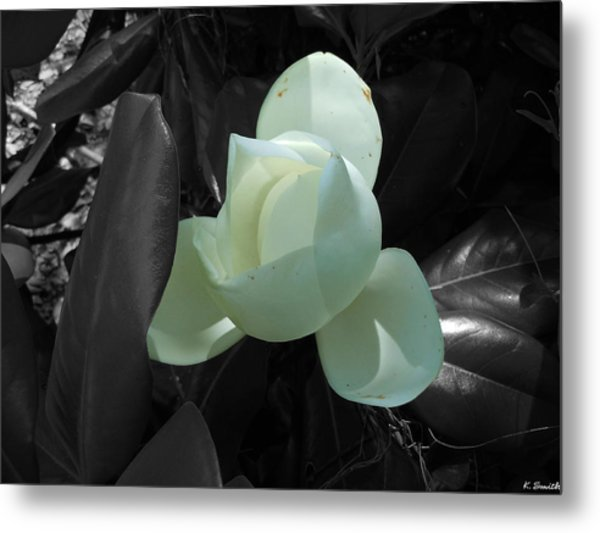 Southern Magnolia Bloom Black And White With 1 Color Photograph By