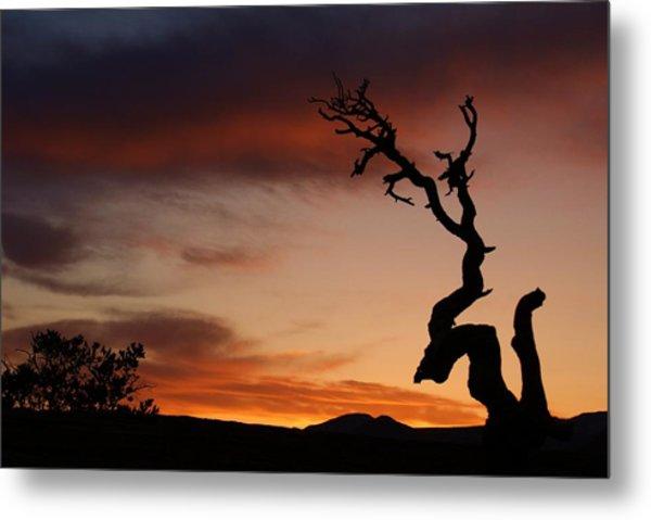 Southwest Tree Sunset Metal Print