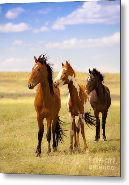 Southwest Wild Horses On Navajo Indian Reservation Metal Print