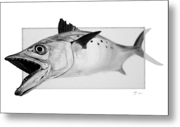 Spanish Mackerel - Pencil Metal Print