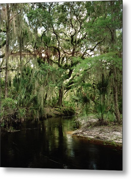 Spanish Moss And Oak. Three Lakes W.m.a. Metal Print by Chris  Kusik