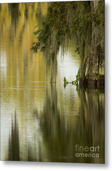 Spanish Moss Reflections Metal Print by Kelly Morvant
