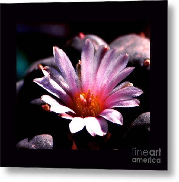 Sparkling Peyote Flower Metal Print