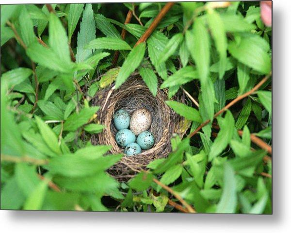 Sparrow Nest With A Cowbird Egg Metal Print