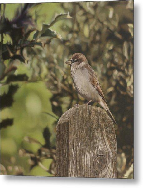Sparrow On Fence Metal Print by Alberto Ponno