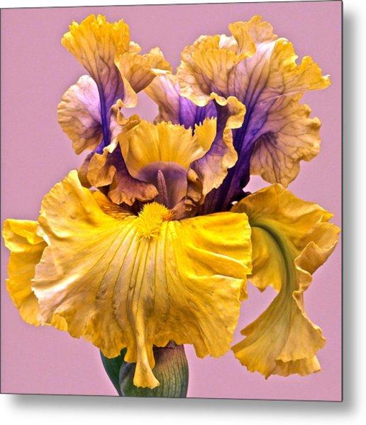 Spectacular Iris Close Up Metal Print