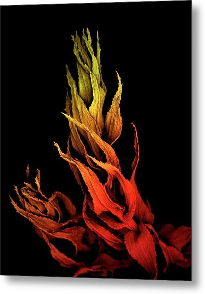 Sphagnum Moss Metal Print by Louise Hughes