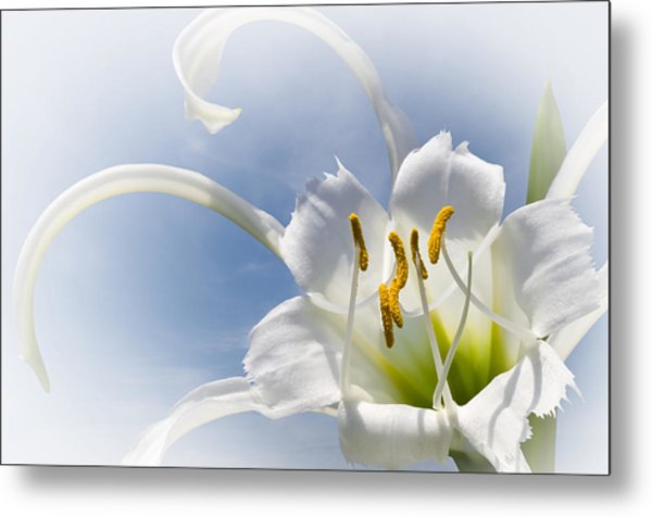 Spider Lily Metal Print