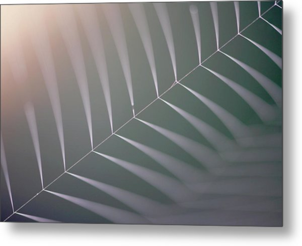 Spider Web Metal Print by Manuel Presti/science Photo Library
