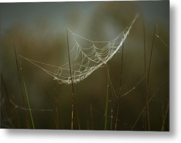Spider's Trap Metal Print