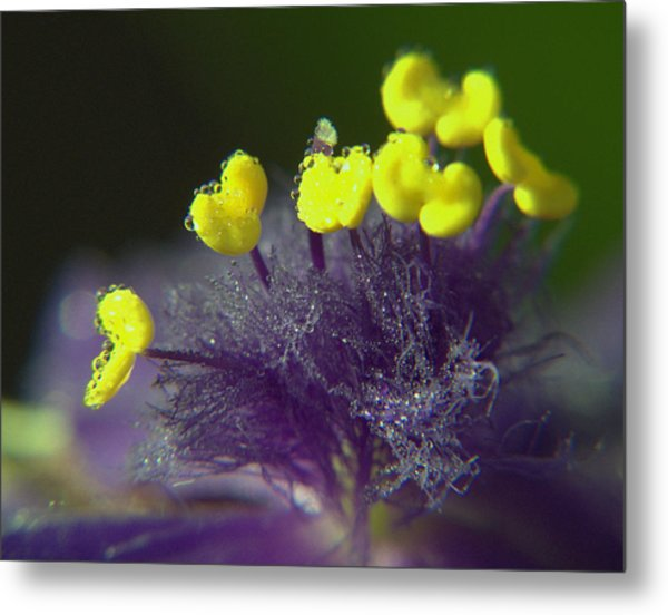 Spiderwort Bubbles Metal Print