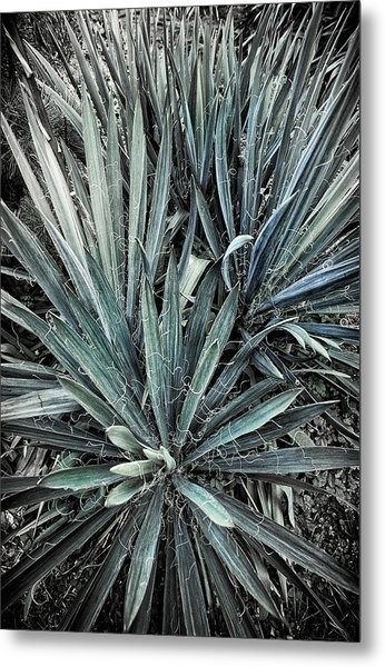 Spiky Blue-green Plant Metal Print