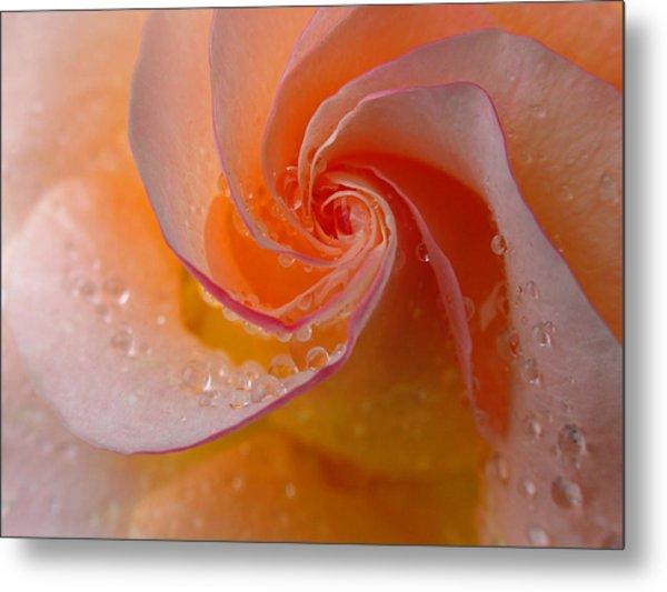 Spiral Rose Metal Print
