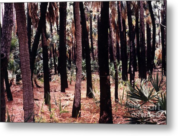 Spirit In The Trees Metal Print by Steven Valkenberg