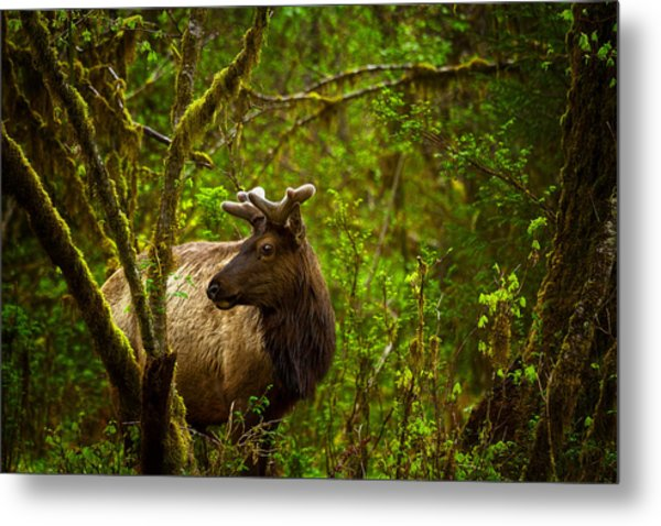 Spirit Of The Forest Metal Print by Stuart Deacon
