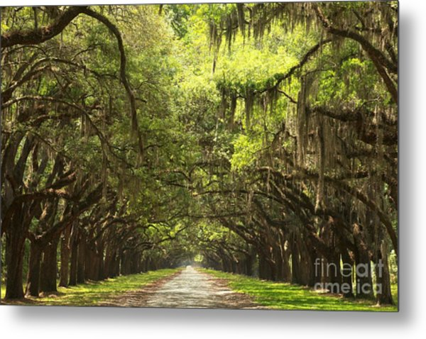 Splendid Oak Drive Metal Print