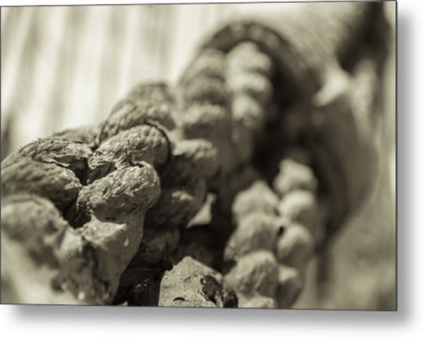 Spliced And Bound Black And White Sepia Metal Print