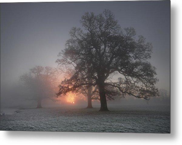Spooky Misty Morning  Metal Print