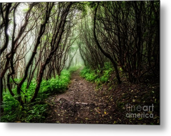 Spooky Trail Metal Print
