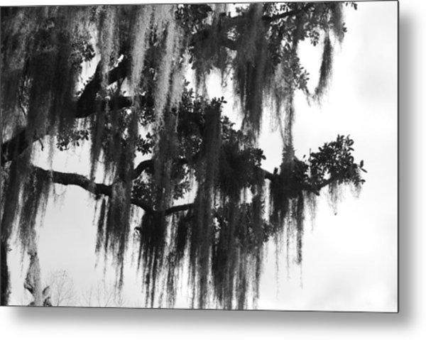 Spooky Trees Metal Print by Cyndi Lenz