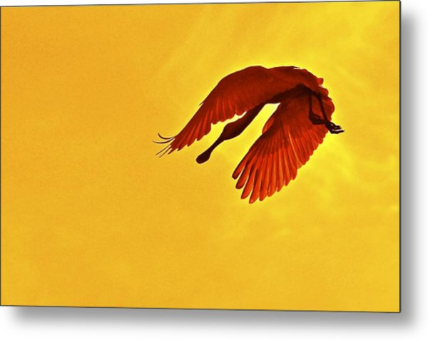 Spoonbill At Sunset Metal Print