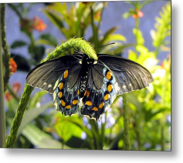 Spotted Beauty Metal Print