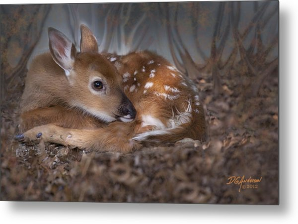 Spotted Innocence Metal Print by Don Anderson