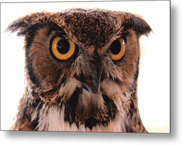 Spotted Owl 1 Metal Print