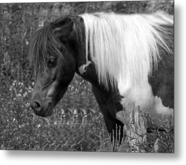 Spotted Pony Metal Print