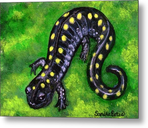 Spotted Salamander Metal Print