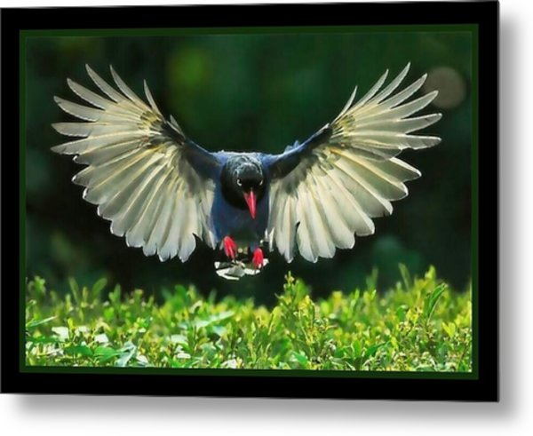 Spread My.wings Metal Print by Tracie Howard