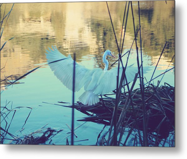 Spread Those Wings And Fly Metal Print