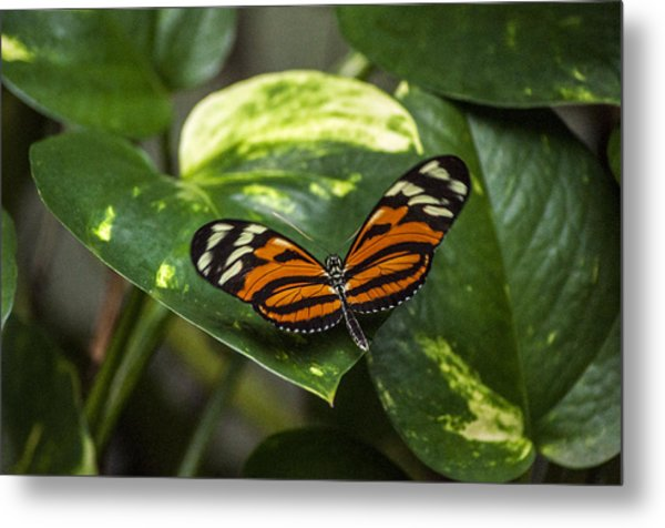 Spread Your Wings Metal Print by Ginger Harris