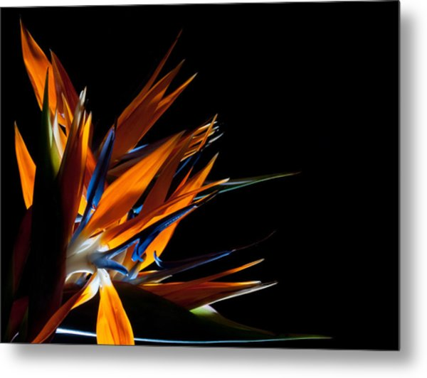 Spreading Paradise  Metal Print by Todd Edson