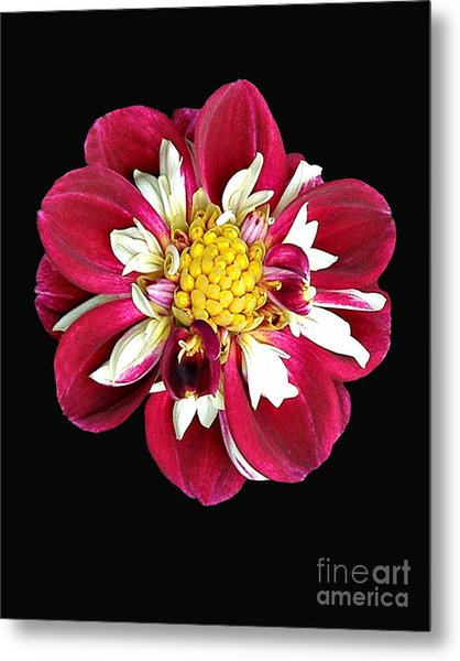 Spring 10 Metal Print by Shirley Sparks