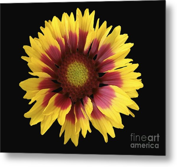 Spring 16 Metal Print by Shirley Sparks