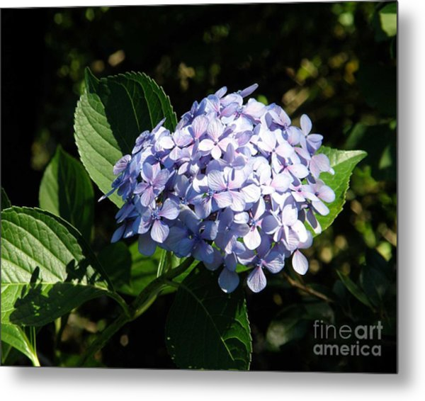 Spring 4 Metal Print by Shirley Sparks