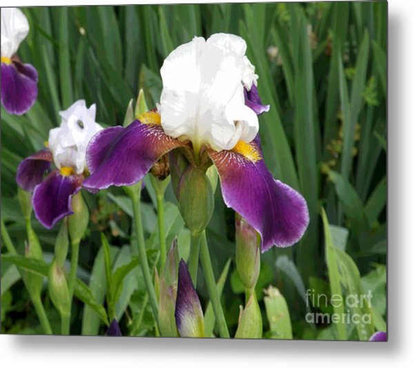 Spring 9 Metal Print by Shirley Sparks