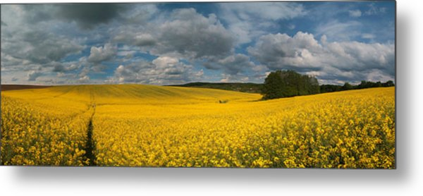 Spring At Oilseed Rape Field Metal Print