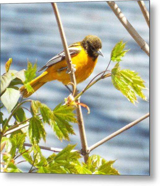 Spring Bird  Metal Print by Lisa Roy