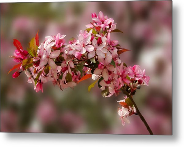 Cheery Cherry Blossoms Metal Print