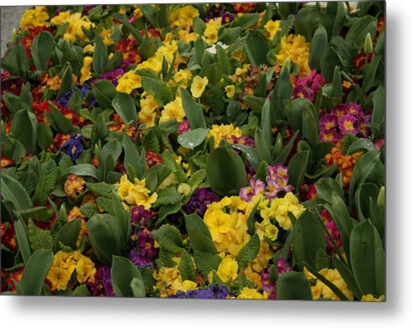 Spring Colour II Metal Print by Maeve O Connell